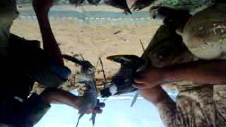 رحلة صيد لي مقتاح الجين في مدينة طبرق