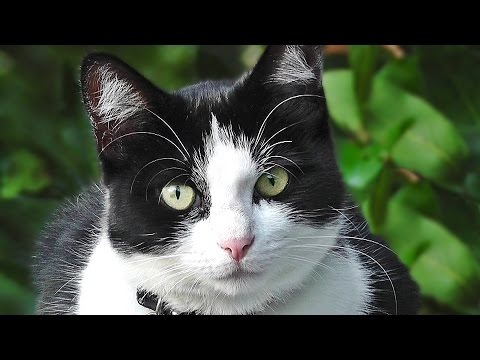 Very Cute Kitten : Cat for Cats to Watch