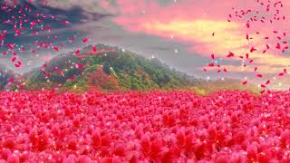 Full of mountains, brilliant red, beautiful, azaleas, dynamic,photography&video background