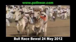 bull race in bewal 24 may 2012
