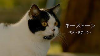 キーストーン / 天月-あまつき-  [Promotion Video]