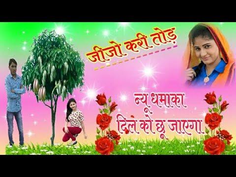 मेरो जीजो कैरी तोड़ लळ र आम की डाळी ¦¦ New Meena Song    Singer-KanaRam Meena/Vikash RAJPURIYA