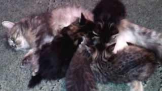 Кошка и котята...еда!!!!