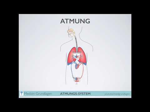 Atmung Teil 1  Medizin Grundlagen
