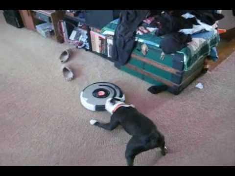 Dog Vs Roomba Youtube