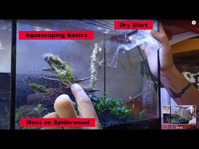 Υδρόβια Φυτά   Εισαγωγή Aquascaping   Planters ep 1