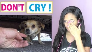 Try Not To Cry: How a little microchip changed this DOG'S life - Reaction