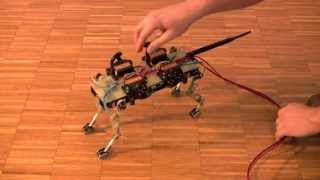 Cheetah-cub mechanical robustness (realtime)