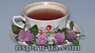 Рецепт приготовления чая из цветов красного клевера