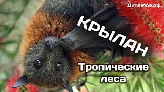 Крылан. Энциклопедия для детей про животных. Тропики