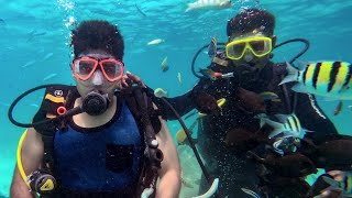 Cheapest Scuba Diving In The World !!!