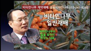 비타민나무 재배방법,강원비타민나무영농조합법인,한상노,