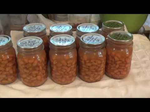 Pinto Beans Growing Canning Cooking Step By Step How To Do It Oag Youtube