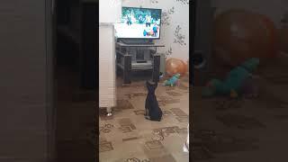 """Собака смотрит фильм: """"Любовь и голуби""""."""