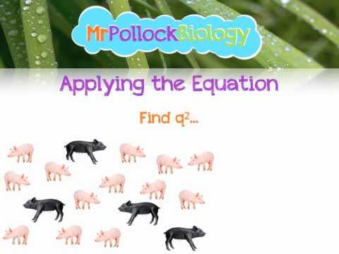 MrPollockBiology Q&A 6: The Hardy-Weinberg Principle