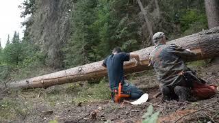 Building a Spruce Bark Canoe - E1 - Harvesting Spruce Bark