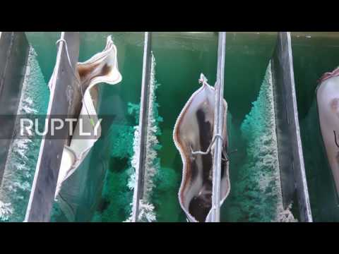 Russia: Watch silver CRYSTALS grow from copper waste at Russian mill