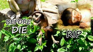 Before Die !! Poor-Poor life baby lost mom || Baby cry call mom but Maria push fall down.