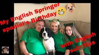 Собачья жизнь. Будни и праздники английского спрингер спаниеля . Наш четвероногий член семьи.❤️😁