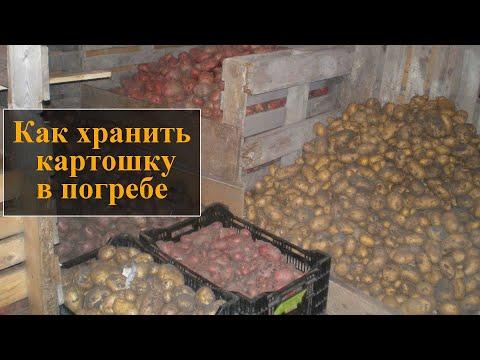 Как хранить картошку в погребе