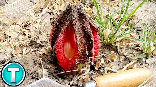 Top 10 Fruits You've Never Heard Of Part 14