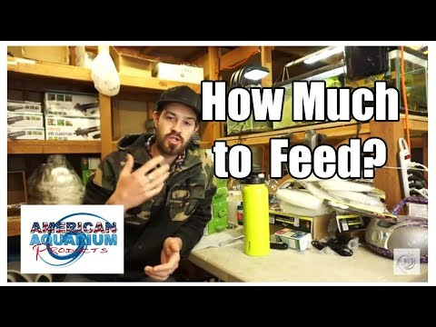 Overfeeding Fish- Limit Ingredient Fish Food | How To Feed Fish