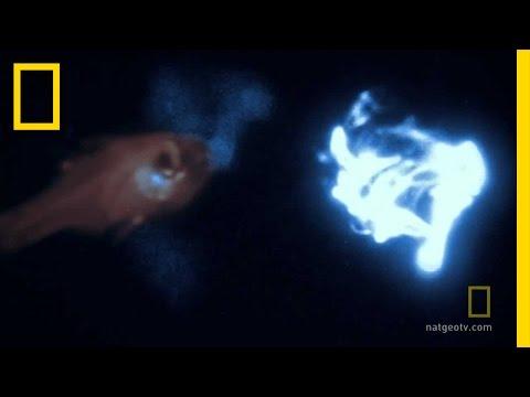 Bioluminescence on Camera   National Geographic