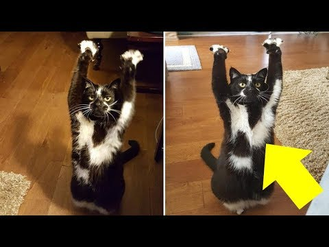 Man Thought His Cat Was Trying To Reach Something, But When He Realized THIS? OMG