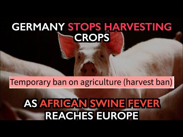 Germany Stops Harvest,