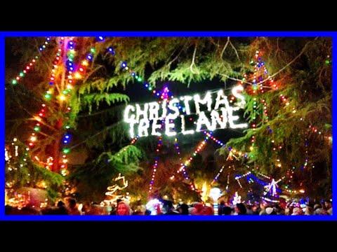 DJ Burns - Christmas Tree Lane!