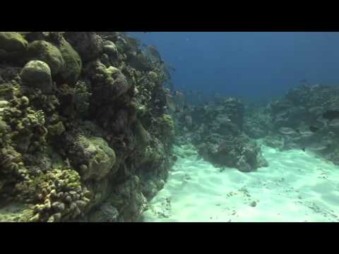 Ashmore Reef: a busy reef