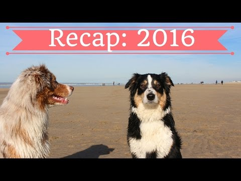 Best Moments of 2016 | Australian Shepherds