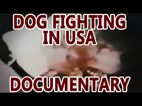 Dog Fighting in the USA (documentary)