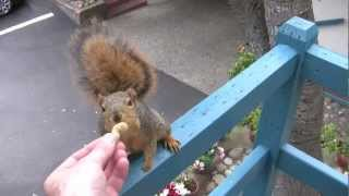 Feeding The Birds And Along Came A Squirrel