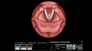 Vocal Folds ID