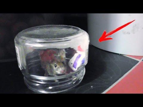 Вопрос: Где и как можно поймать живую мышь рукой?