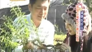 2013124 生活接力棒 第539集 桃園枸杞養生-君君