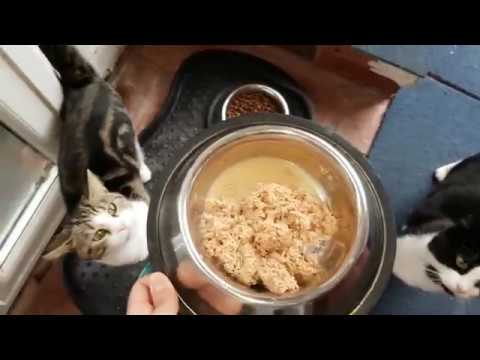 Feeding Noisy Hungry Cats - 4K Ultra HD 2160p Resolution Video