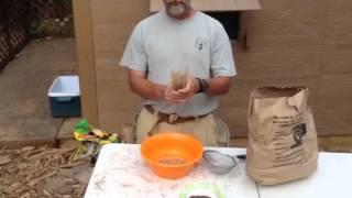 Harvesting Mustard Seeds