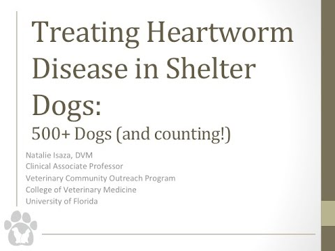 Treating Heartworm Disease in Shelter Dogs: 500+ Cases (and