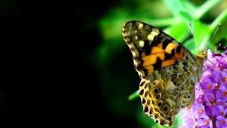 山内惠介の「花と蝶(森進一)」をオカリナで吹いてみました。 I played...