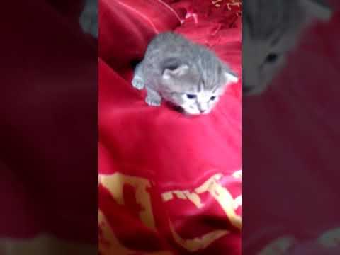 отдаю в дар котенка. котенок родился в конце августа