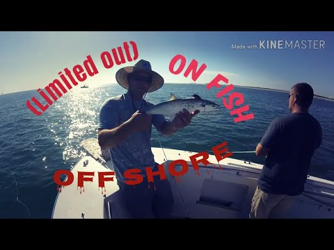 (limited Out On Fish) Offshore In Fort Pierce  Florida