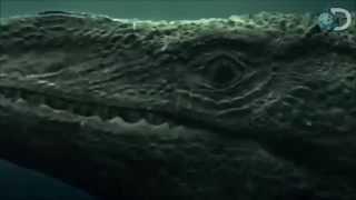 T-Rex Vs Predator X