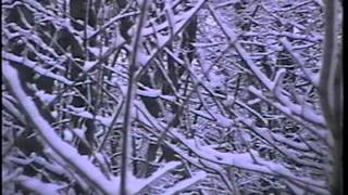 Drone Forest - DF01 - Drone Forest Video 1