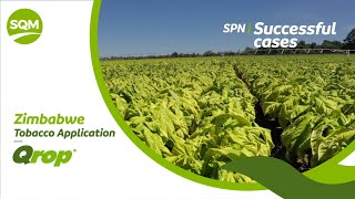 SPN Successful cases, Tobacco – Zimbabwe