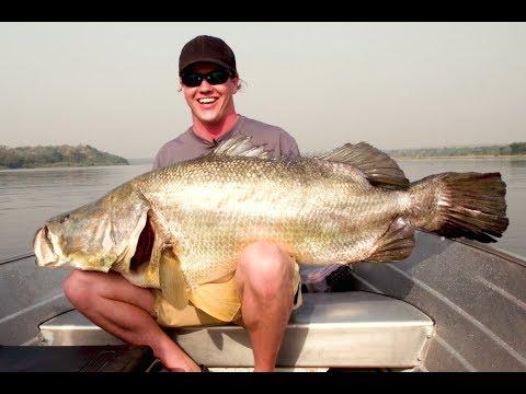 100+ Pound Gigantic Nile Perch!!!