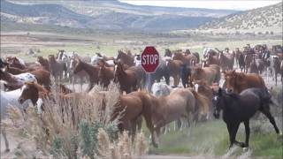 Great American Horse Drive 2017
