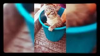 Gato busca a Raúl