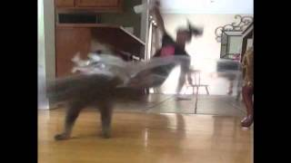 Woman's Prank On Cat Backfires